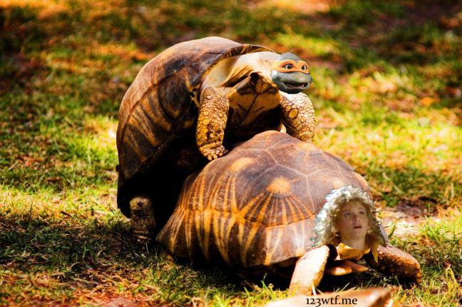 Teenage Mutant Ninja Turtles 05 (WTF Saint Pauly)