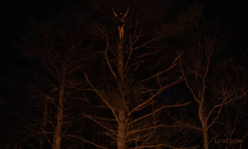 The Witch 29 cinematography Branching out into witchcraft (WTF Watch The Film Saint Pauly)