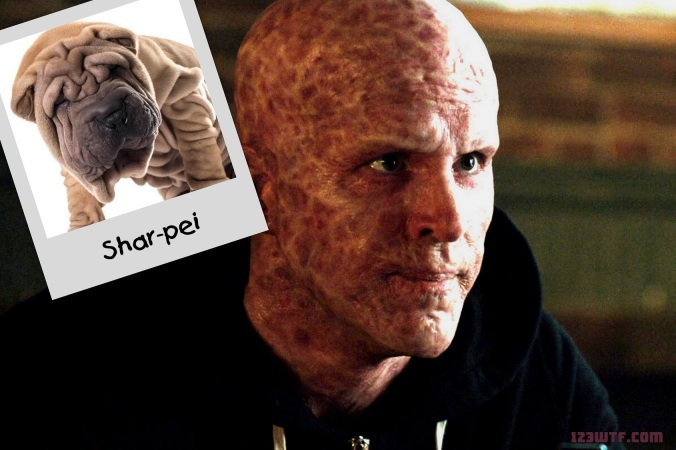 Deadpool 18 Collage Like a radio active Shar-pei (WTF Watch The Film Saint Pauly)