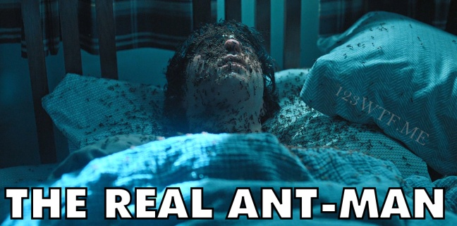 Hereditary 76 Meme The Real Ant-Man WTF Watch The Film Saint Pauly